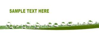 Малюсенькие падения воды на зеленых листьях Стоковая Фотография