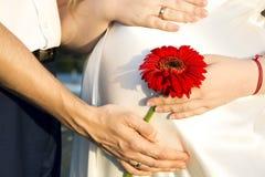 Мама и папа держат их руки на животе беременной m Стоковые Фотографии RF