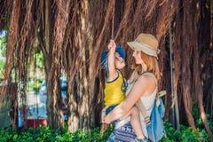 Мама и сын на путешественниках Вьетнама на дереве предпосылки красивом с воздушными корнями Стоковые Фото