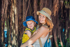 Мама и сын на путешественниках Вьетнама на дереве предпосылки красивом с воздушными корнями Стоковое Фото