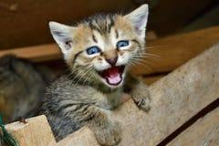 Мама кота и малый котенок играя в гнезде стоковые изображения rf