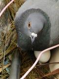 мама птицы стоковые изображения rf
