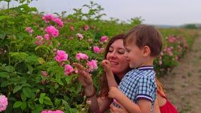 Мама с молодым сыном в поле роз видеоматериал