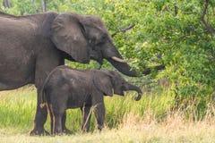 мама слона младенца стоковое изображение