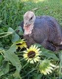 Мама Турция Стоковое Изображение RF