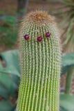 Маммиллярия кактуса Стоковое Фото
