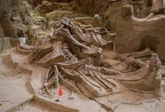 Мамонтовое место стоковое изображение