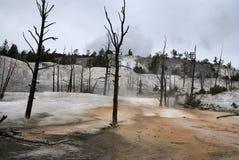 мамонтовый парк скачет термальные США yellowstone Стоковая Фотография RF