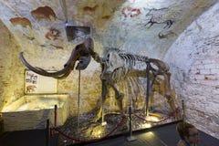 Мамонтовый скелет в музее мамонта Барселоны Стоковая Фотография