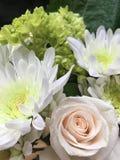 Мамы Roses& весны стоковые изображения