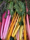 Мангольд - густолиственный зеленый овощ Стоковая Фотография