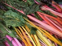 Мангольд - густолиственный зеленый овощ Стоковое Фото