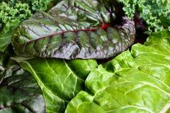 Мангольд и листовая капуста Стоковые Изображения RF