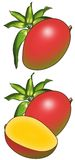 мангоы Стоковые Изображения