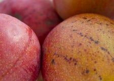 мангоы Стоковое Фото