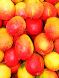 мангоы Стоковое фото RF