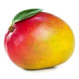 манго плодоовощ Стоковое Изображение
