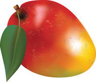 Манго с лист Стоковое Фото
