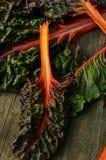 Мангольд радуги Стоковая Фотография RF