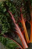 Мангольд радуги Стоковые Фотографии RF