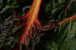 Мангольд радуги Стоковое фото RF