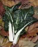 Мангольд, сильно здоровый питательный овощ Стоковое Фото