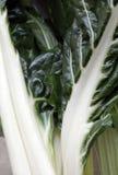 Мангольд, сильно здоровый питательный овощ Стоковая Фотография