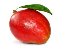 манго Стоковое Изображение RF