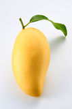 манго Стоковые Фотографии RF