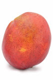манго Стоковая Фотография