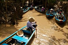 Мангрова в перепаде Меконга, Вьетнам Стоковое фото RF