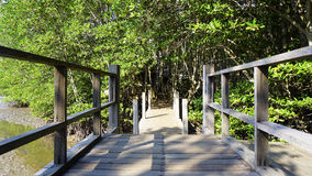 Мангрова леса и дорожка моста Стоковое Изображение