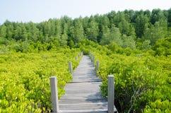 мангрова леса Стоковая Фотография