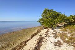 Мангрова и пляж во время отлива стоковые фотографии rf