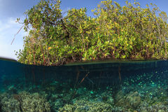 Мангрова и риф, ampat раджи, Индонезия Стоковая Фотография RF