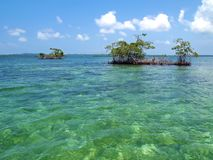 мангрова островов стоковые фотографии rf