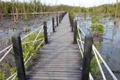 мангрова пущи моста деревянная Стоковые Изображения RF
