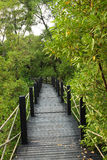мангрова пущи моста деревянная Стоковое фото RF