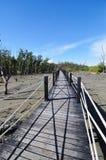мангрова пущи моста Стоковое Фото
