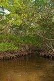 мангрова пущи стоковое изображение rf