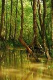 мангрова пущи Стоковая Фотография