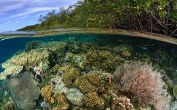 Мангрова Ридж, ampat раджи, Индонезия 05 Стоковые Фото