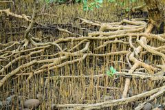 мангрова Стоковое Изображение RF