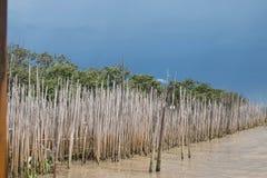мангрова Стоковые Фото