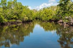 мангрова стоковые изображения