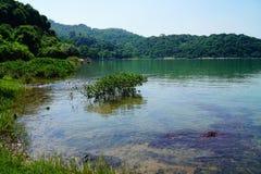 мангрова Стоковое Изображение