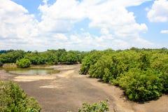 мангрова Стоковые Изображения RF