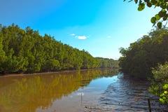Мангрова reforest стоковые фотографии rf