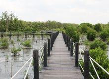 Мангрова reforest Стоковая Фотография