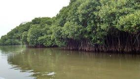 Мангрова reforest Стоковое Изображение RF